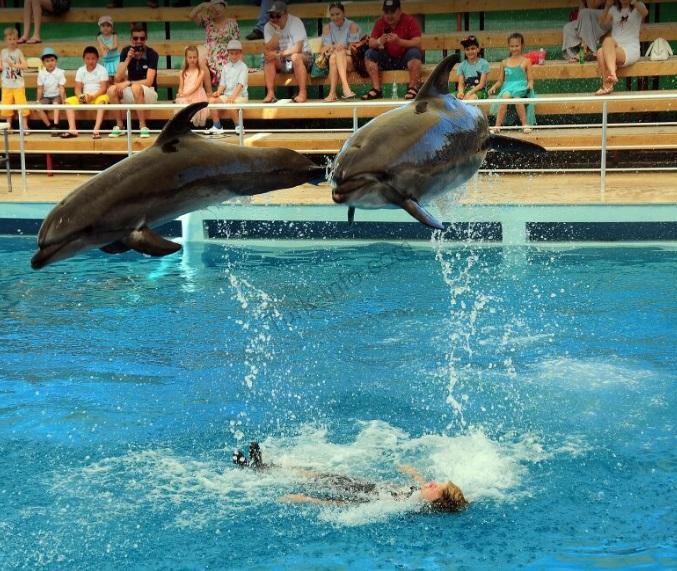 مرکز دلفیناریوم و جانوران دریایی آکسو